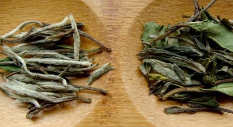 White tea (Bai Mudan) buds vs. leaves